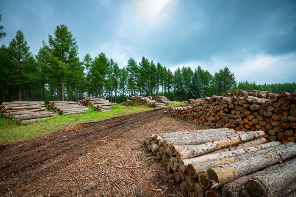 Best trees for firewood