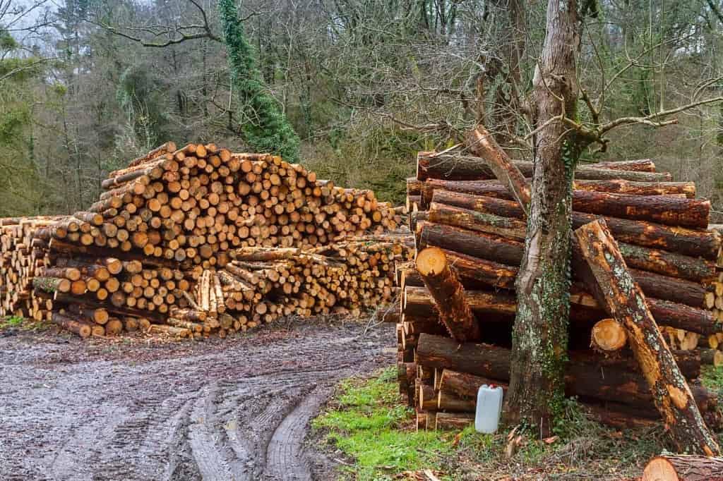 Trees for firewood